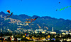 Berkeley Kite Festival :