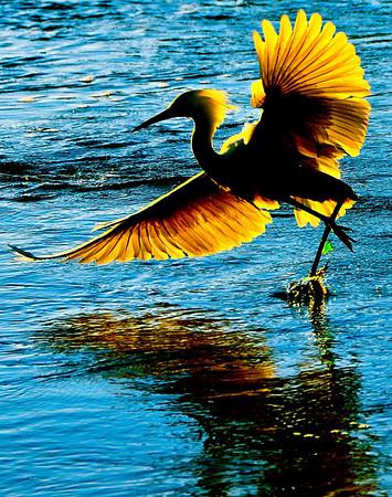 Birds of Emeryville
