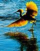 Birds of Emeryville :
