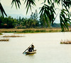 Viet Nam, 1998 :